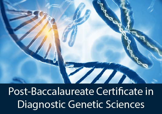 close-up colorful DNA strand and chromosomes - Post-Baccalaureate Certificate in Diagnostic Genetic Sciences